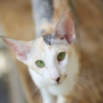 Profile picture of Xara Bua Luang